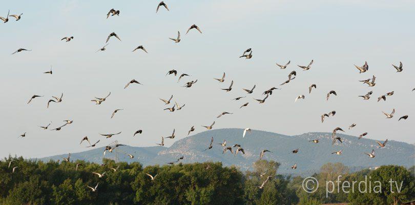 Vogelschwarm-im-Sonnenuntergang