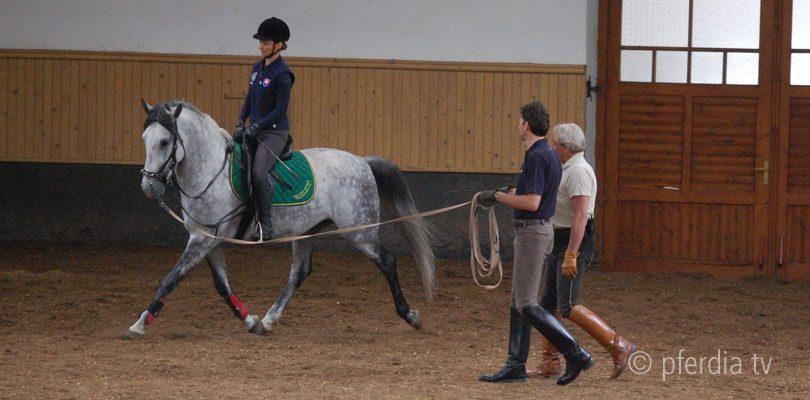 junge-Pferde-ausbilden