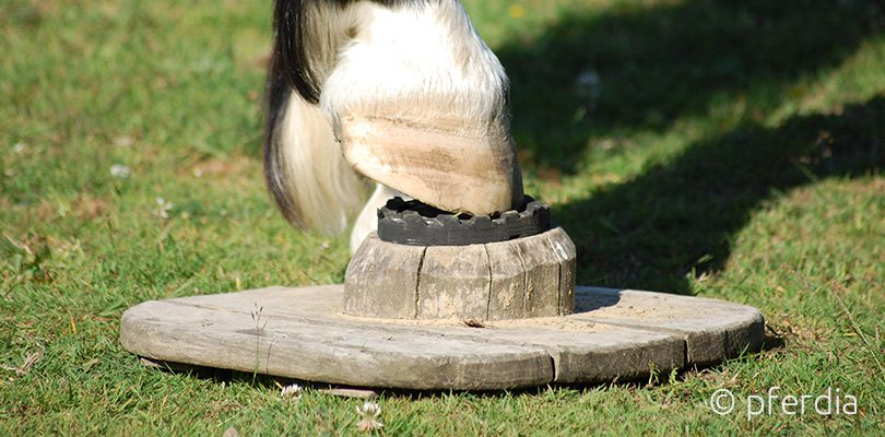 Balance-Pads-fuer-Pferde