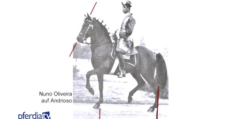 Nuno-Oliviera-auf-Andrioso