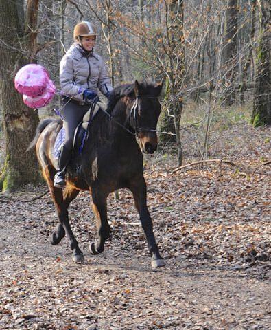 Pferde-in-Rente
