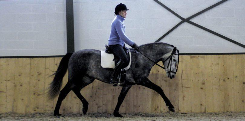 Pferd-klassische-Dressur