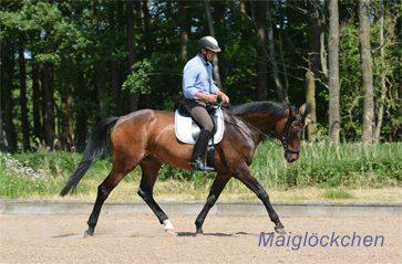 Pferd-im-Training