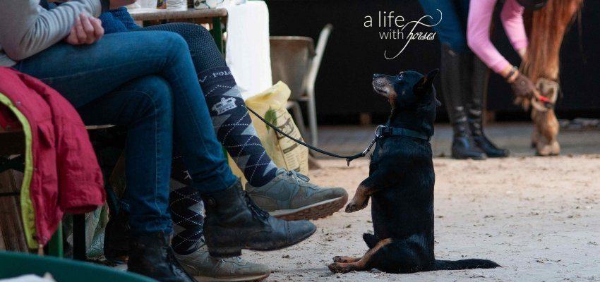 Hund macht Männchen, Zuschauerbeine