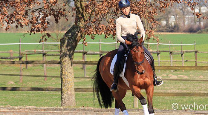 Reiterin Ingrid Klimke auf einem braunen Pferd