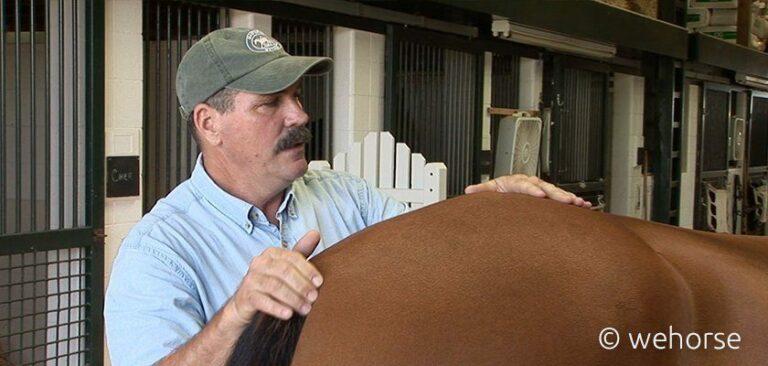 Mann behandelt Pferd