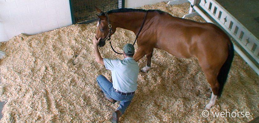 Pferd von oben, daneben Mann der es mit der Hand am Bein berührt