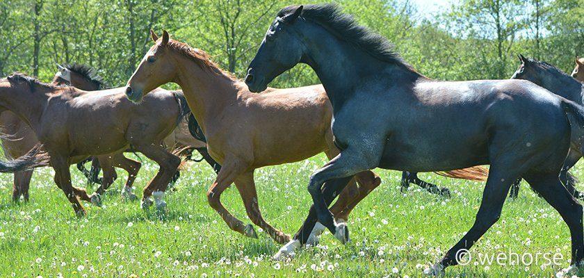 Zu Beginn der Weidezeit sollte es eine Wurmkur Pferd geben