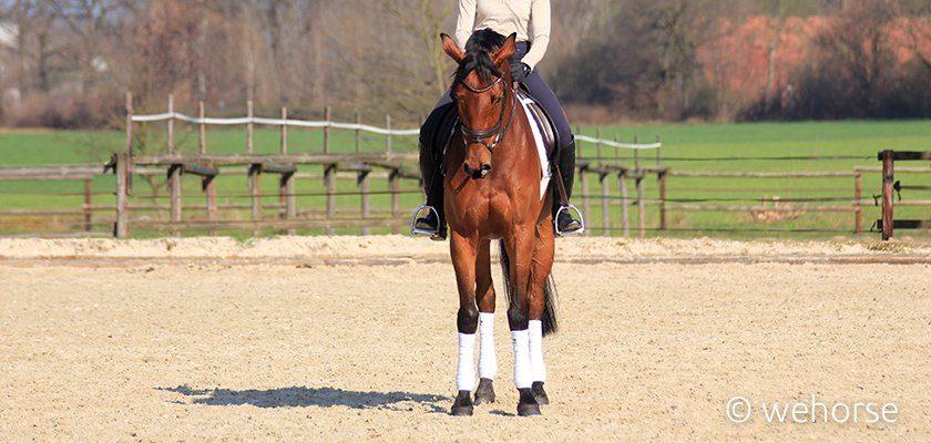Braunes Pferd Halten
