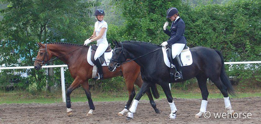 Pferde auf dem Turnier