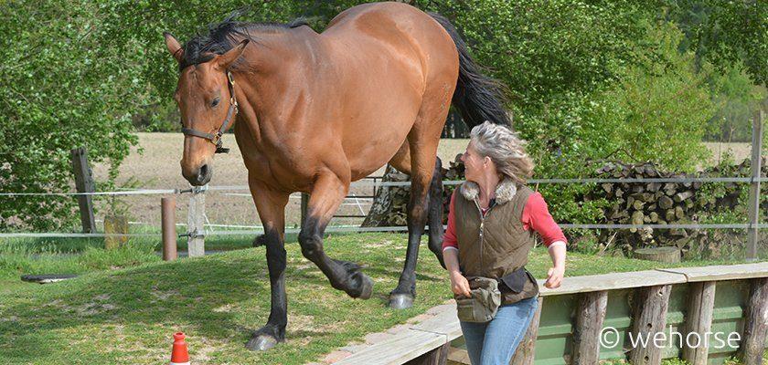 Pferd läuft über Hang, Ausbilderin daneben