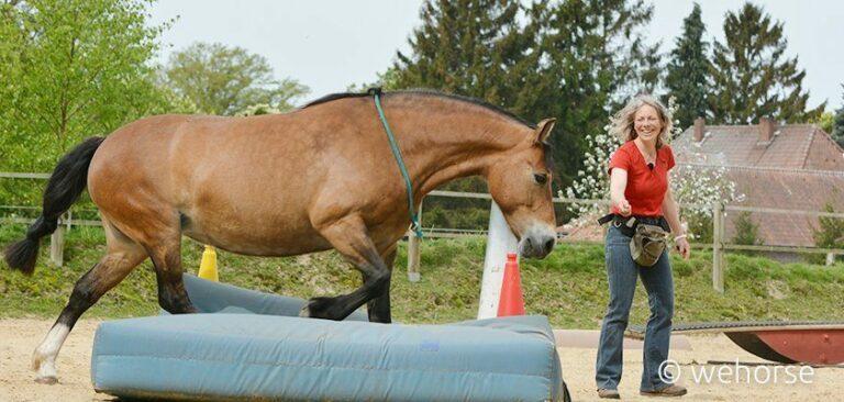 Pferd läuft auf Turnmatte