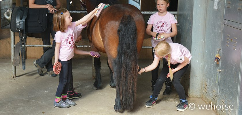 Vier Kinder putzen ein Pony.