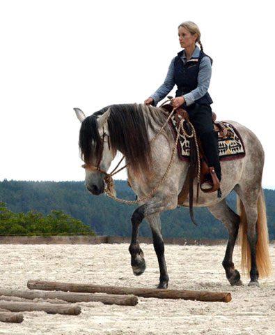 paltz-schleppen-pferd