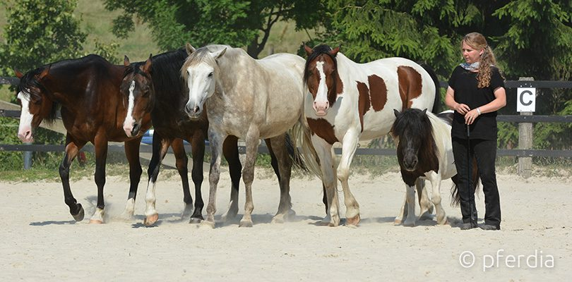 Mensch und Pferd gemeinsam
