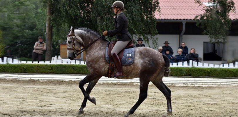 Working Equitation Birte Ostwald