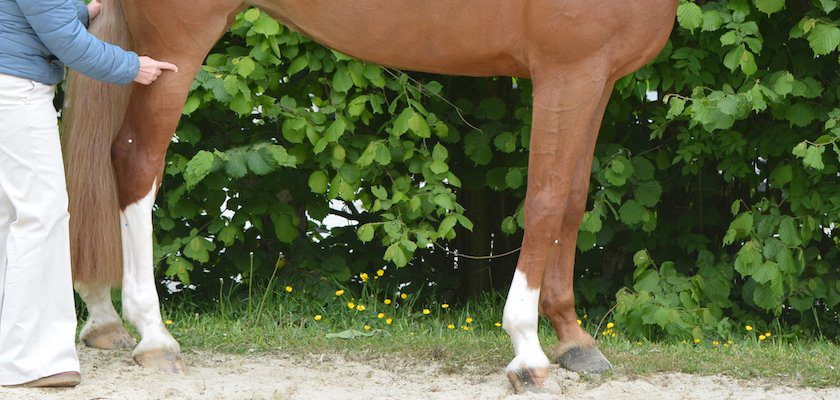 Akupressur fürs nervöse Pferd