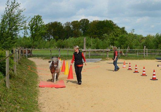 Freiarbeit Pferd - Frei im Parcours