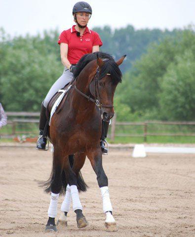 Ingrid Klimke Traversale reiten