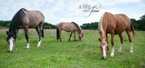Drei weidende Pferde.