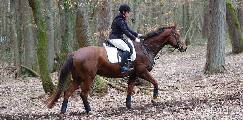 Muskelaufbau Pferd Hangbahntraining