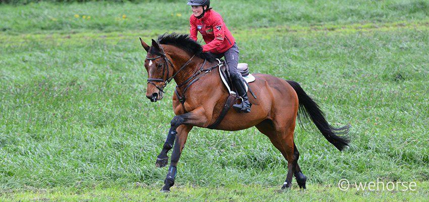 Gamaschen Vielseitigkeit Beinschutz Pferd