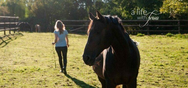 Pferd auf Weide, Frau geht weg