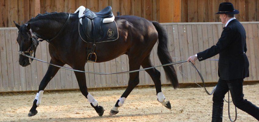 pferd beim longieren