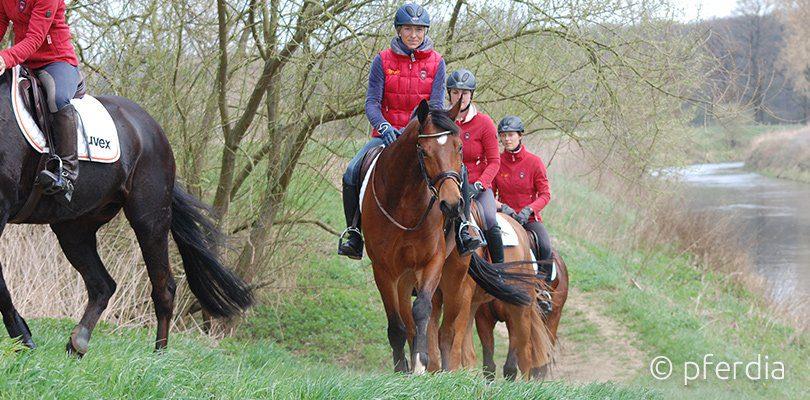 Ingrid Klimke beim Hangbahntraining mit ihrem Pferd