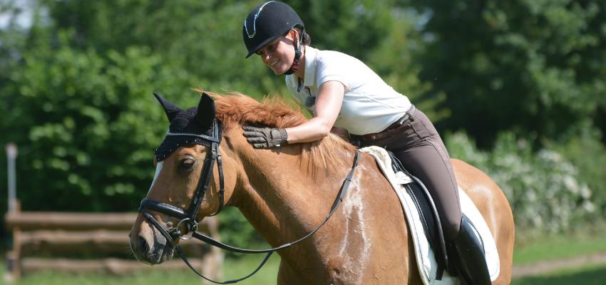 Ein gut bemuskeltes Pferd bleibt gesund