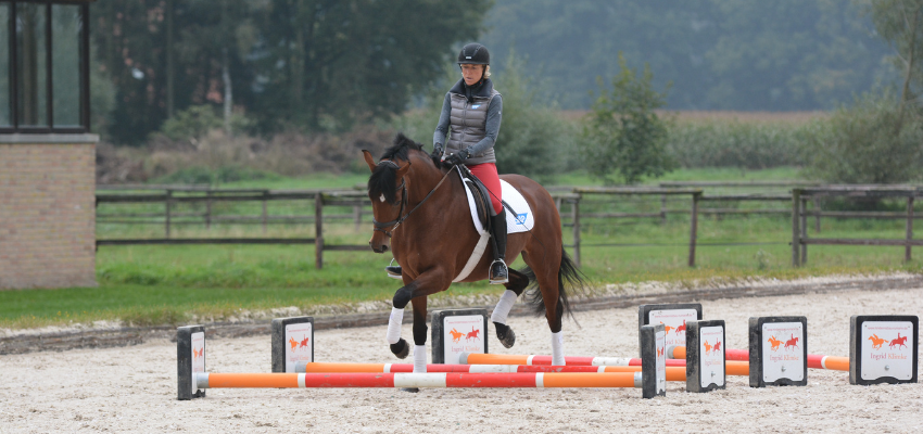 Muskelaufbau Pferd durch Cavalettiarbeit unterstützen