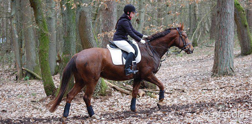 Pferd Hangbahntraining beim bergaufreiten