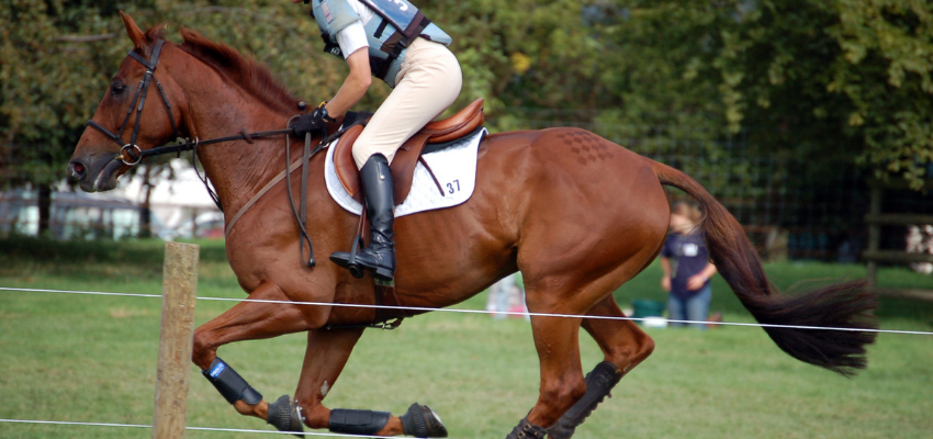 Um einen Geländeritt erfolgreich zu meistern und die Hindenrisse sicher zu überwinden, muss das Pferd bestimmte Eigenschaften mitbringen