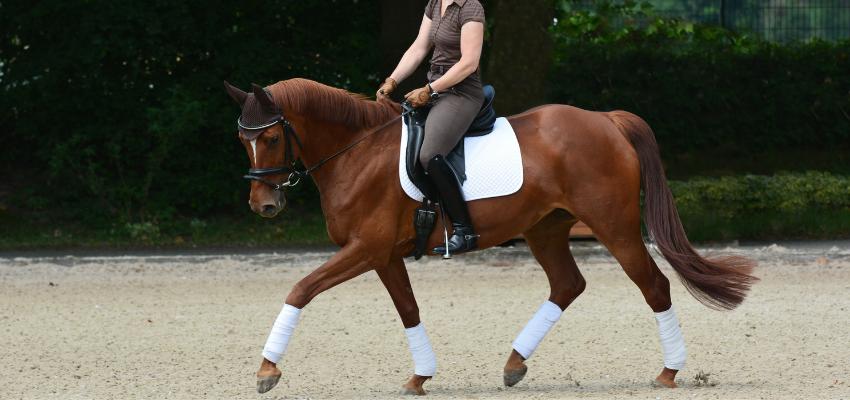 Reiter und Pferd üben E-Dressur-Aufgaben