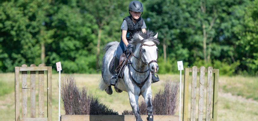 Pferde lernen schnell, dass sie über das Geländehindernis Hecke durchwischen können