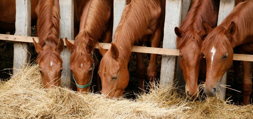 Pferd-Heubedarf-Stall