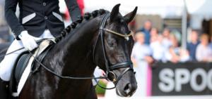 Pferd und Reiter müssen für die höheren Dressurklassen gut ausgebildet sein