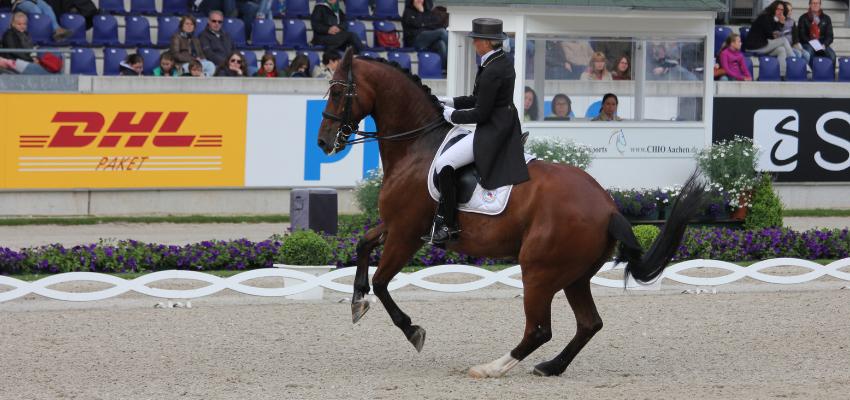 Uta Gräf reitet in der Dressur Klasse Grand Prix