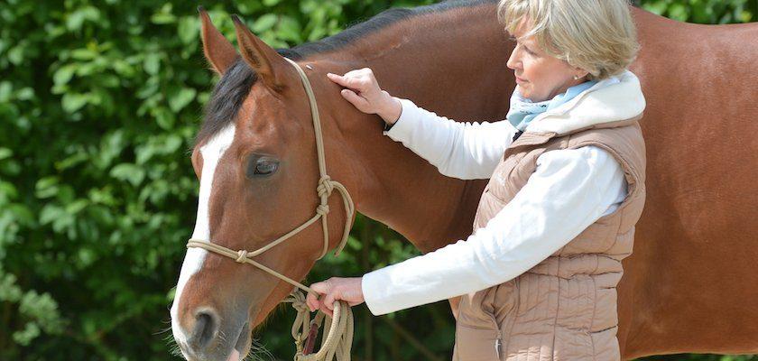 Akupressur Pferd beruhigen Akupressurpunkt Bl10