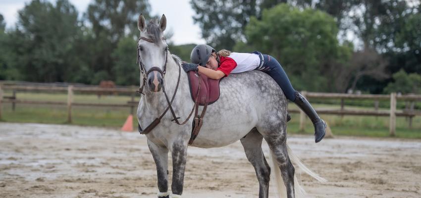 Pferdekauf-Pferd-finden