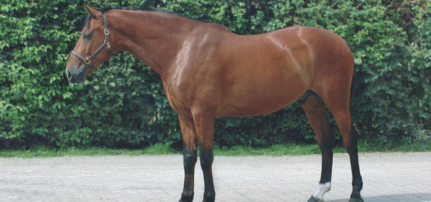 Pferdekauf-Pferdebeurteilung
