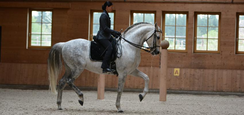 Versammlung Pferd: Beispiel