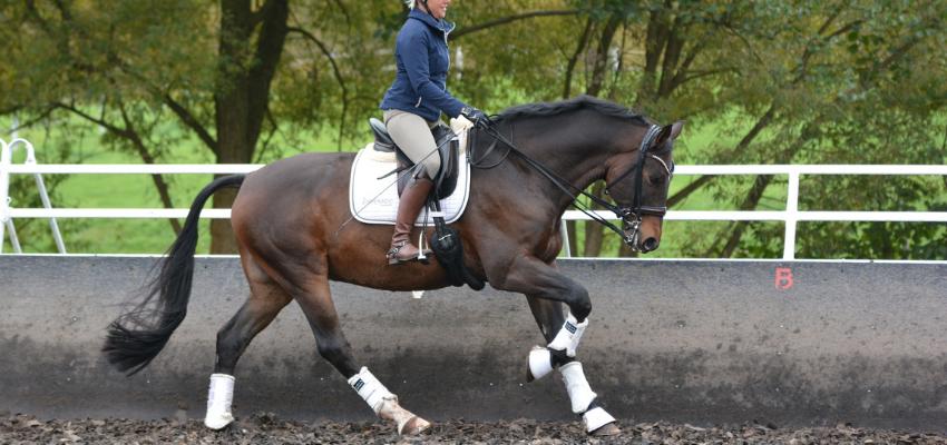 Selbsthaltung beim Pferd Uta Gräf