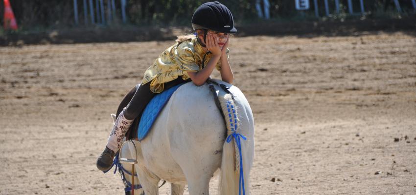 In drei Schritten zu einer besseren Beziehung mit deinem Pferd