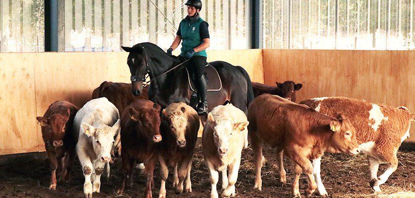 rinderschein-working-equitation