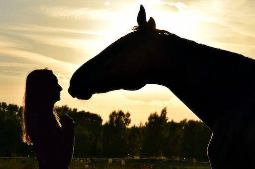 Erstes Pferd