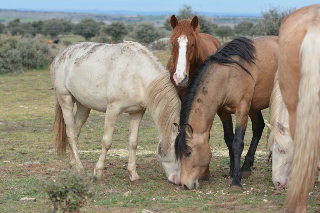 Wieviel kostet ein Pferd im Monat?