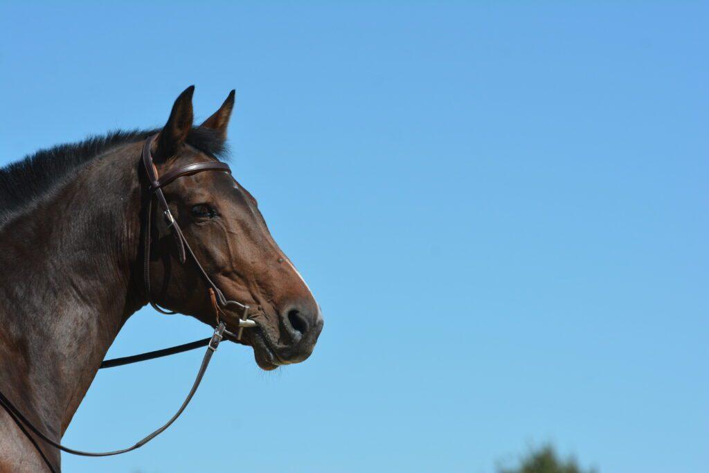 Fliegensprays gehören zur Ausrüstung Pferd