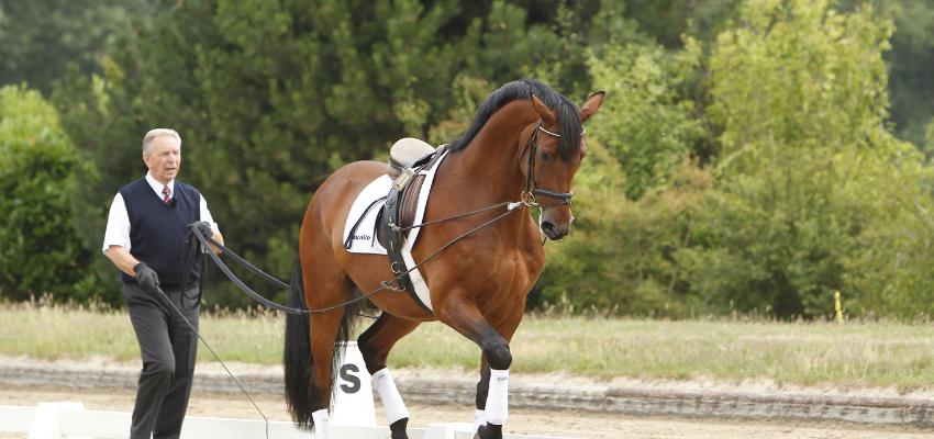 Arbeit an der Doppellonge mit Pferd