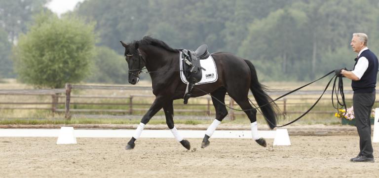 Pferd an der Doppellonge